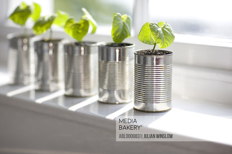 Recyclable tin cans with seedlings on a window sill