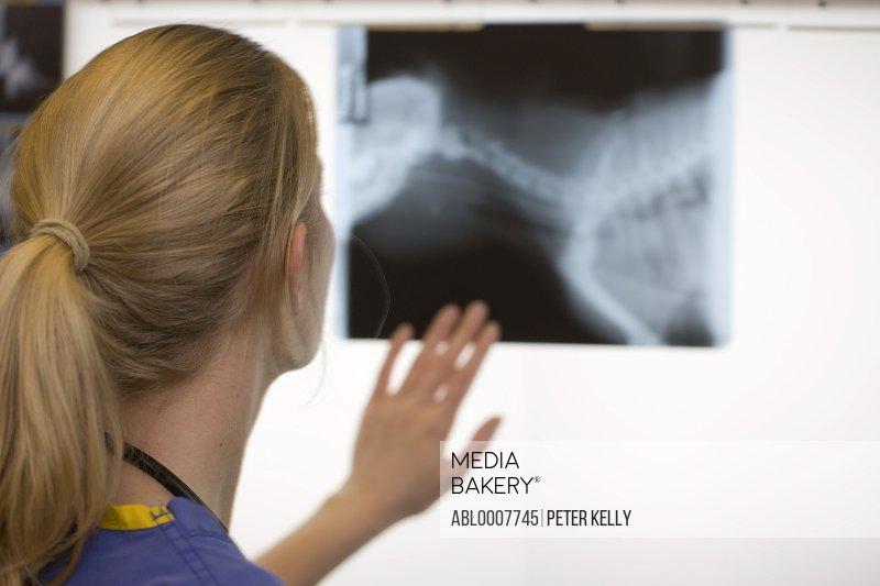 Back View of Vet Examining X-ray