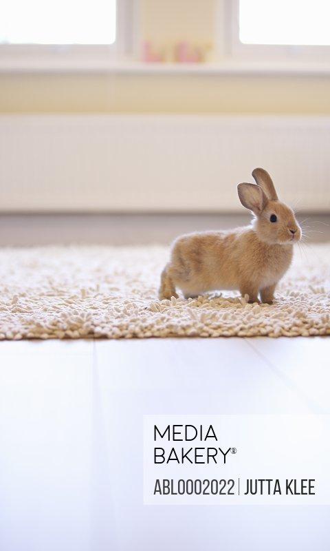 Rabbit Standing on Rug