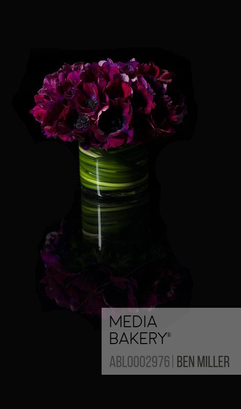 Bouquet of Purple Poppies Flowers in Vase