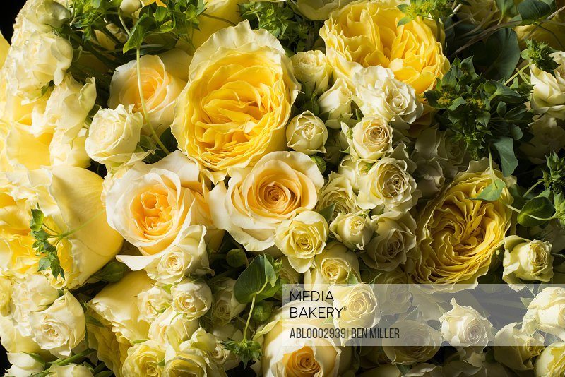 Close up of Yellow Roses and Persian Buttercup Flowers