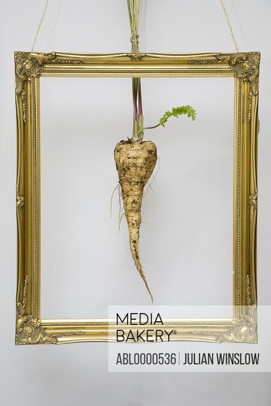 Hanging gold frame with parsnip in the center