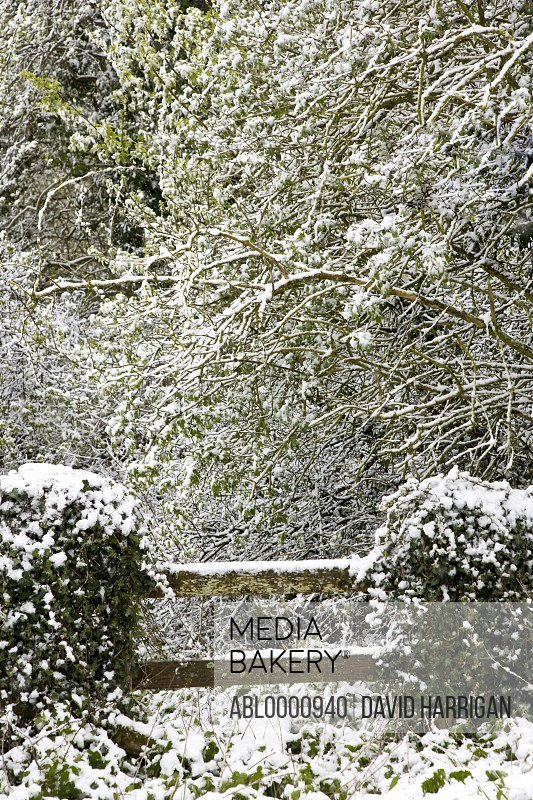 Wooden stile and trees covered in snow