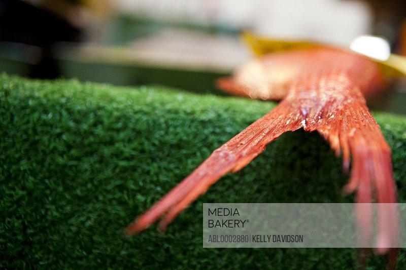 Close-up View of Orange Fish Tail