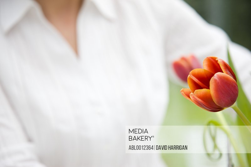 Close up of a woman arranging tulips