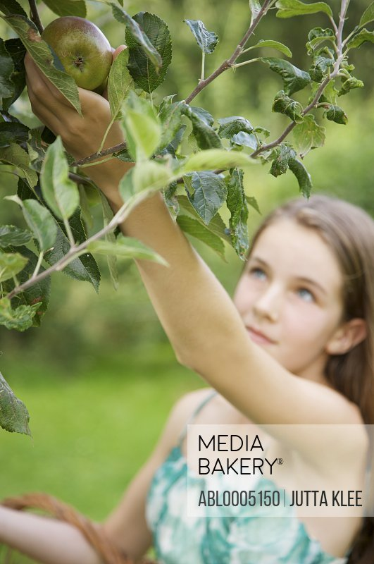 Teenaged girl picking an apple from apple tree