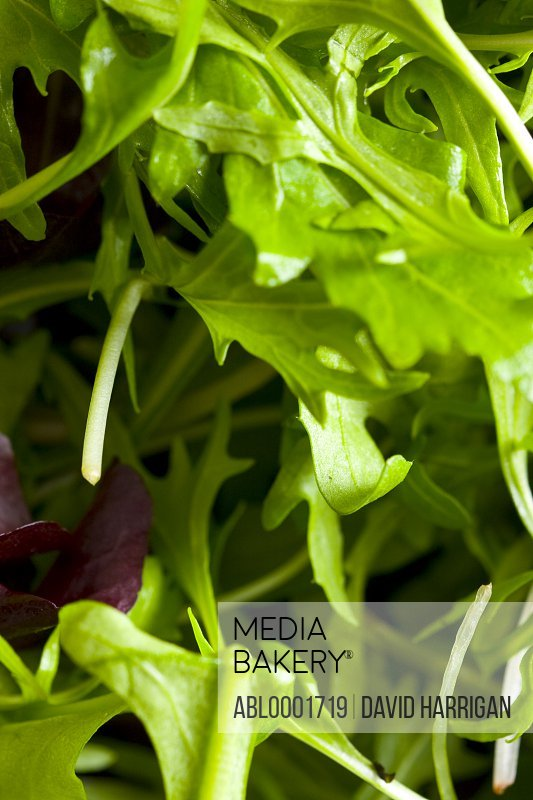Extreme close up of rocket salad leaves