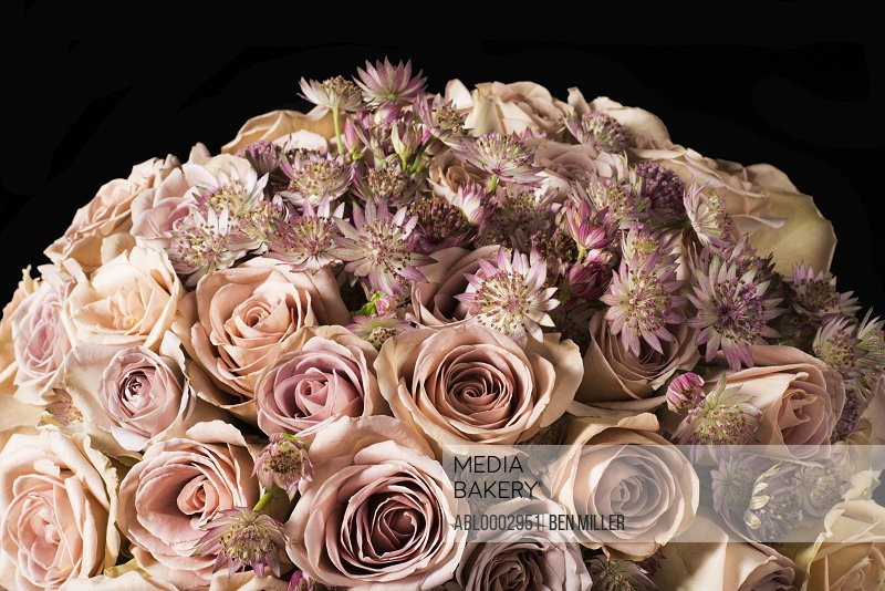 Close up of Pink Roses and Daisies Bouquet