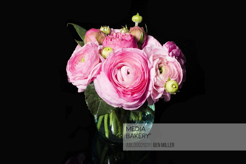 Bouquet of Pink Persian Buttercup Flowers in a Glass Vase