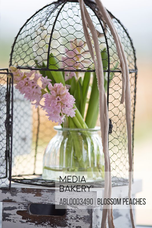 Vase with Pink Hyacinths in Birdcage