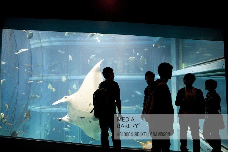 People Standing in front of Aquarium Tank