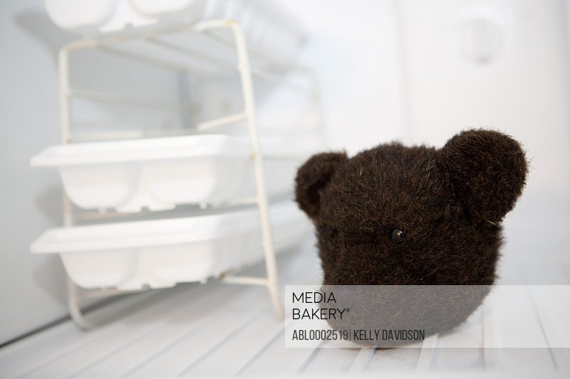Head of Teddy Bear In Freezer Compartment
