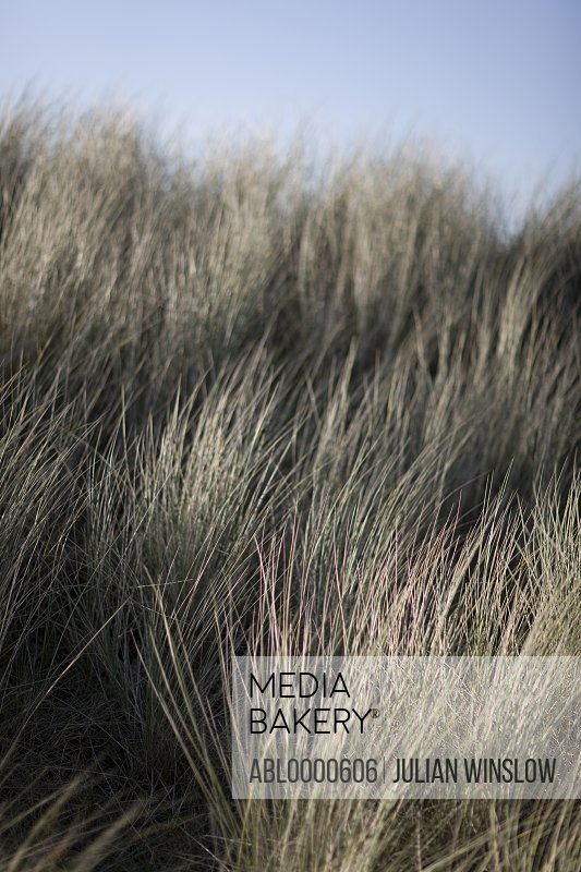 Extreme close up of meadow grass