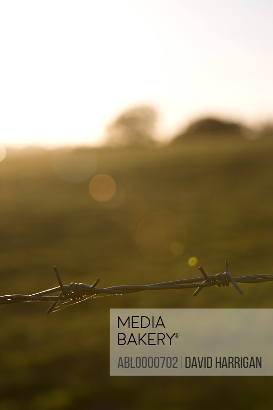 Barbed wire with field