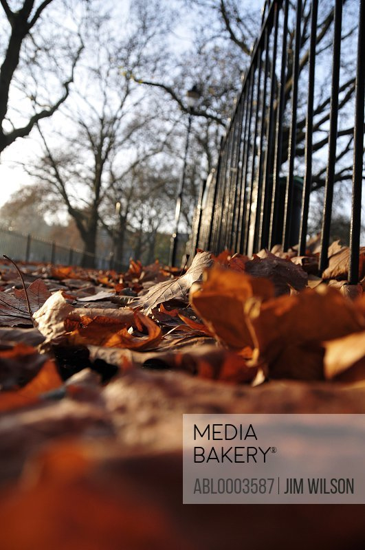 Fallen Autumn Leaves in a Park, Low angle view
