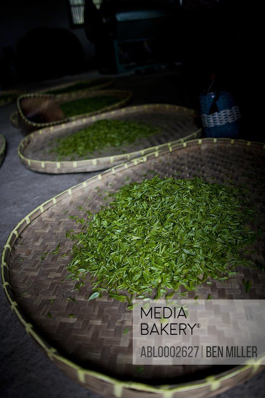 Freshly Picked Tea Leaves Drying on Bamboo Mat