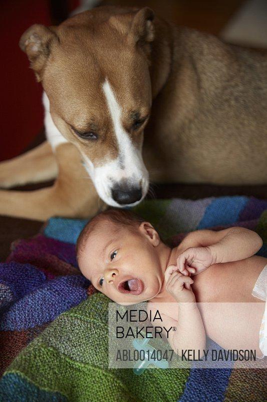 Dog Watching over Newborn Baby Girl