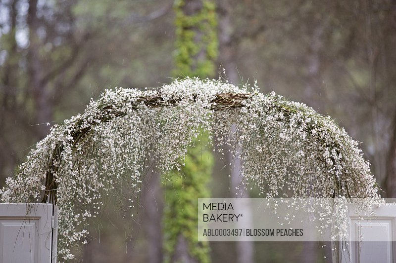 Garden Arch Covered in White Blossom at Wedding Ceremony
