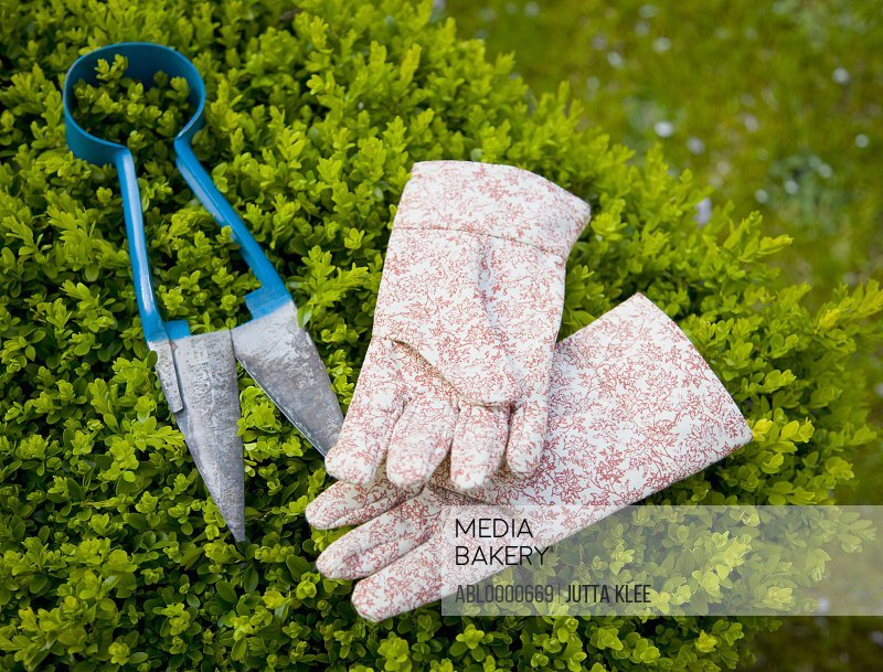 Close up of a pair of gardening gloves and secateurs lying on a shrub