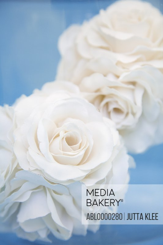 Extreme close up of two fabric white roses