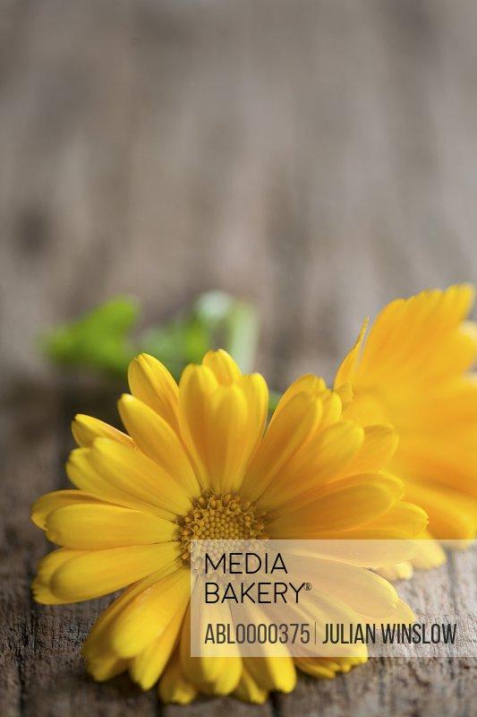 Yellow marigold flowers on wood