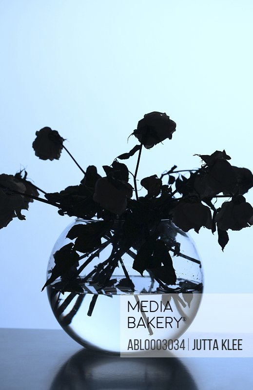 Silhouette of withered Roses in a Glass Vase