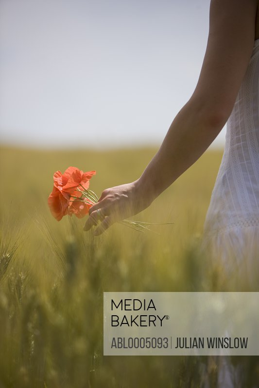 Close up of a woman hand holding red poppies in a field