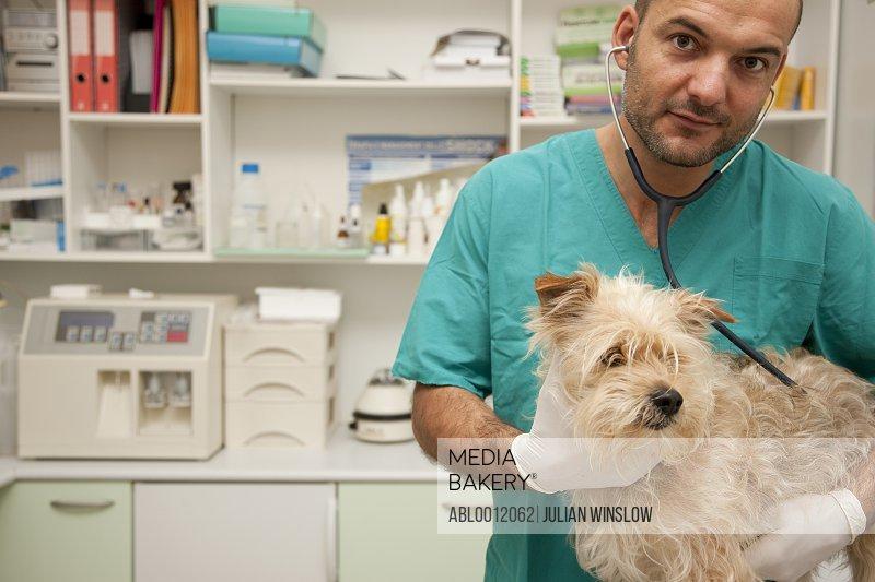 Vet inspecting dog