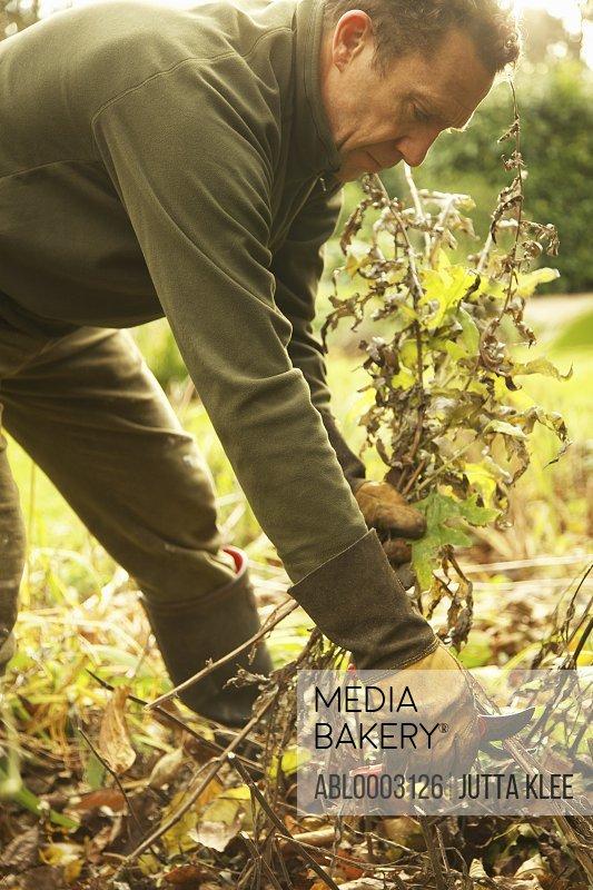 Gardener Removing Weeds