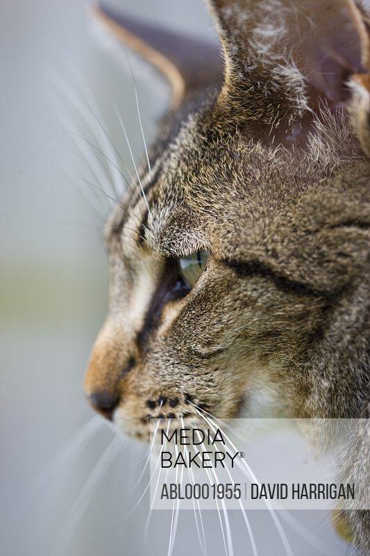 Close profile up of a pet cat