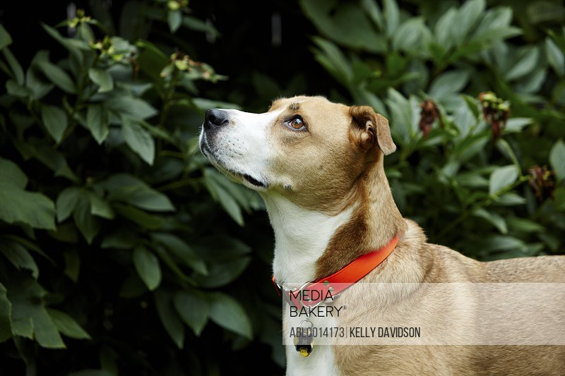 Profile of Dog Outdoors