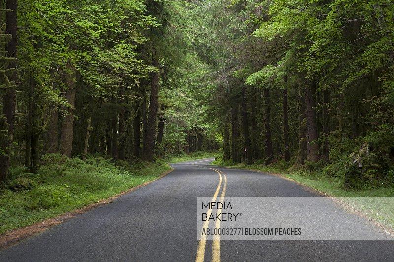 Tree Lined Asphalt Road