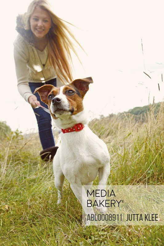 Jack Russell Dog with Young Woman in Background