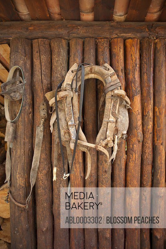 Horse Collar Hanging on Stable Wall