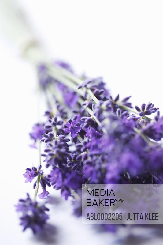 Bundle of Lavender Flowers - Close-up view