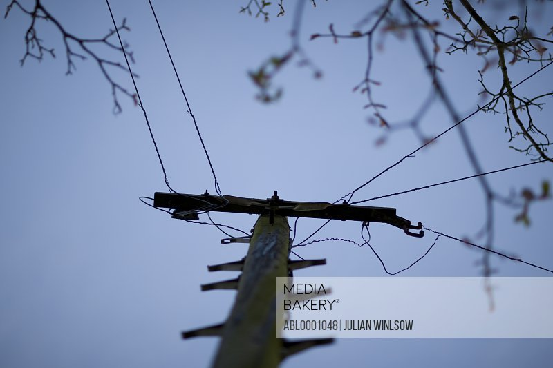 Electricity pole with blue sky and tree branches