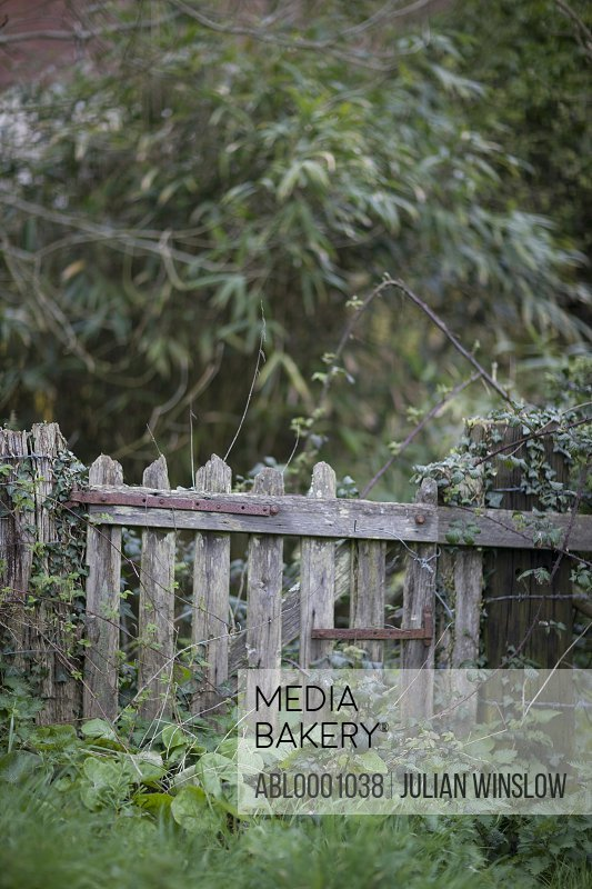 Close up of a wooden gate in an overgrown garden
