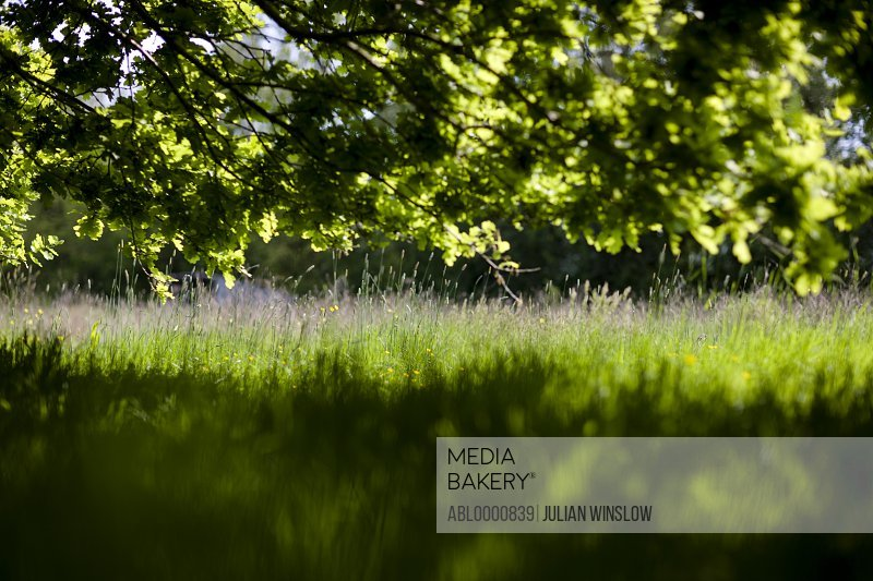 Sunny field with shade and leafy tree branches