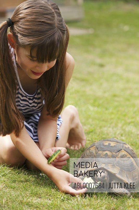 Girl Feeding Tortoise a Slice of Cucumber