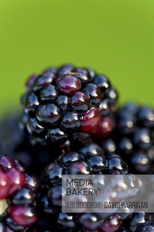Close up of blackberries