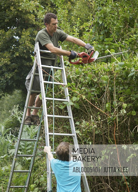 Man standing on a ladder using an electrical hedge trimmer
