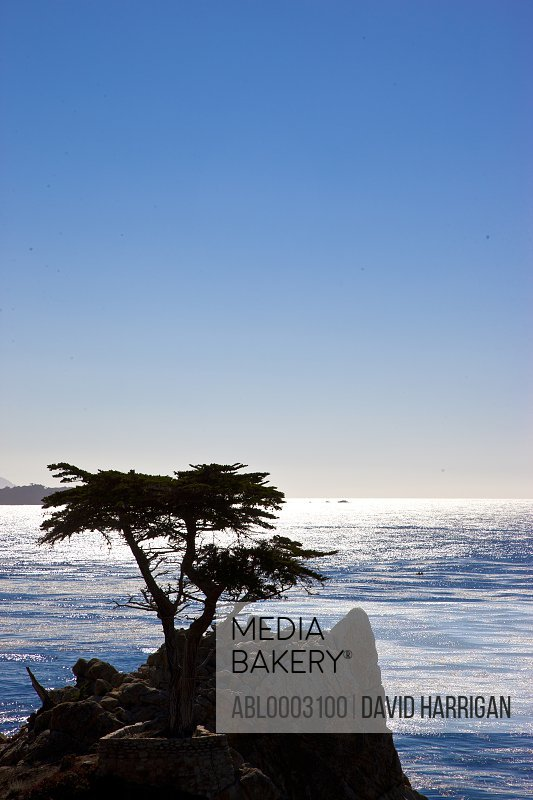 Lone Cypress, 17 Mile Drive, Monterey Peninsula, California, USA