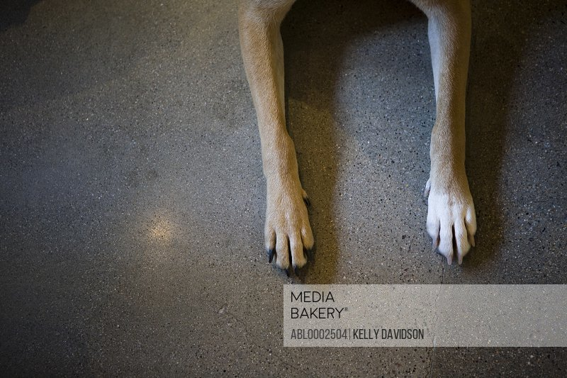 Dog's Paws