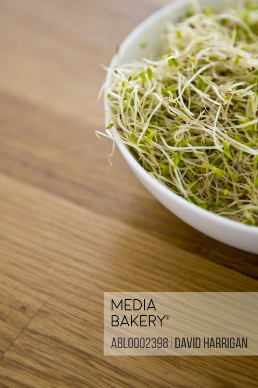 Bowl of Alfalfa Sprouts