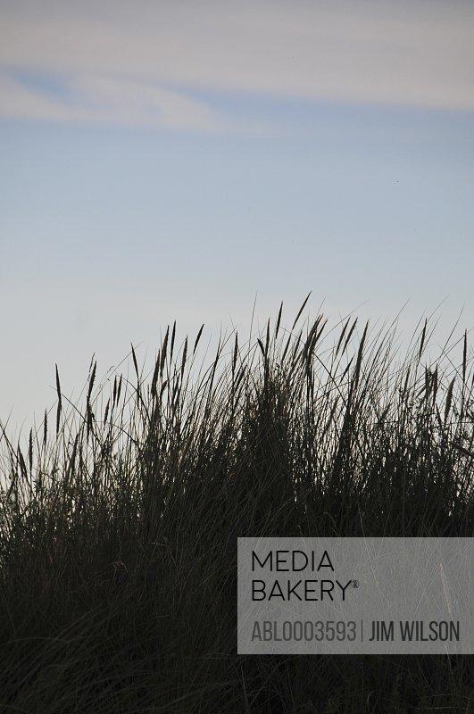 Meadow Grass against Blue Sky