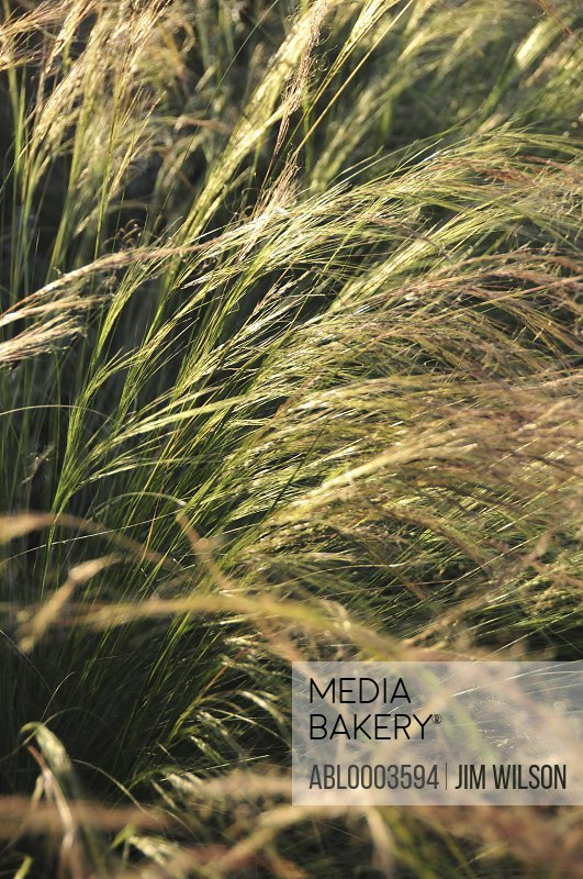 Meadow Grass, Full Frame