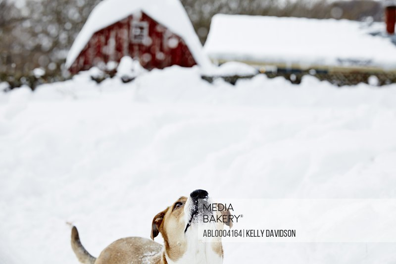 Dog Playing in Snow