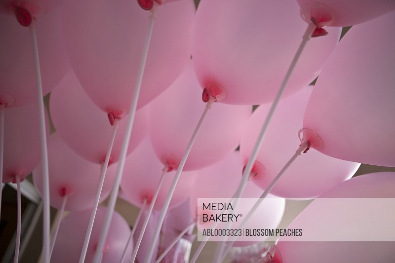Pink Party Balloons, Close-up View