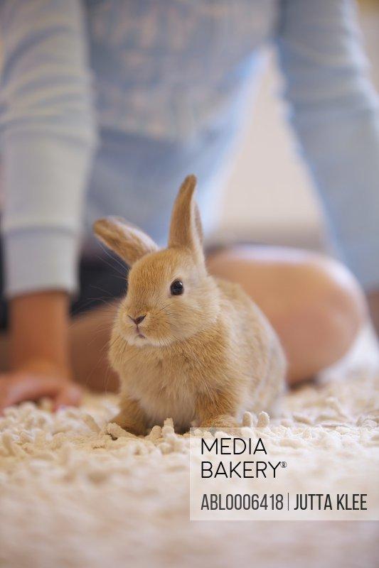 Rabbit Crouching on Rug