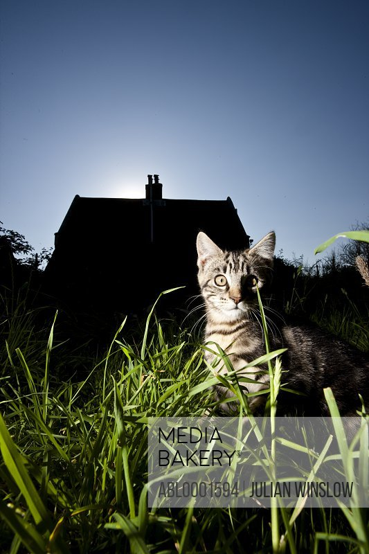 Cat sitting amongst long grass